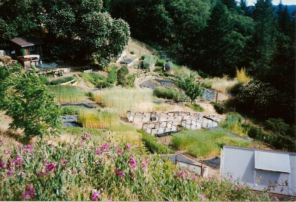 Ecology Action research garden, Willits, CA 2001