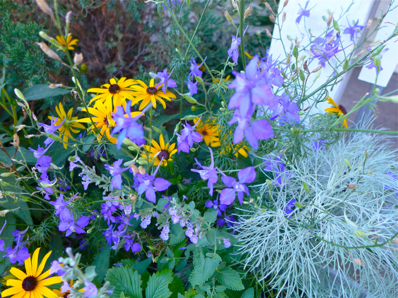 oklahoma native plants | Eco Landscaping